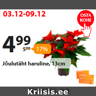 Allahindlus - Jõulutäht haruline, 13 cm