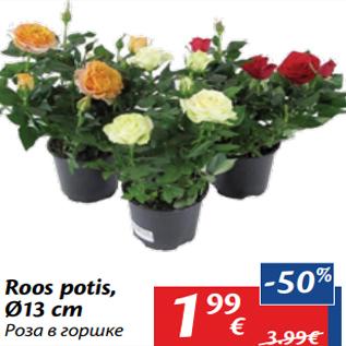 Allahindlus - Roos potis, Ø13 cm